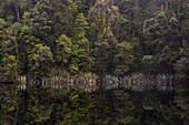Spiegelung im Wasser, Lake Matheson, Westland Tai Poutini National Park, Westküste, Südinsel, Neuseeland, Ozeanien