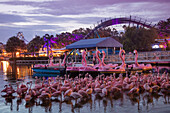 Pink flamingos and flamingo-shaped paddle boats with Mako hypercoaster ride attraction at Sea World Orlando theme park at dusk, Orlando, Florida, USA
