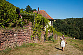 Young woman wears traditional dirndl and holds Frankenwein Franconian red wine while walking on path near vineyard, near Wertheim, Spessart-Mainland, Franconia, Baden-Wuerttemberg, Germany