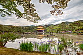 Golden Pavilion Temple with maple tree, pine trees and iris flowers, Kyoto, Japan