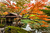 Rest house and red maple tree at pond of Happo-en Garden, Minato-ku, Tokyo, Japan