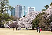 Japanische Familien freuen sich an der Kirschblüte im Shinjuku Gyoen mit Wolkenkratzern im Hintergrund, Shinjuku, Tokio, Japan