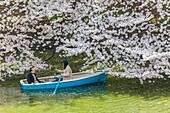 Junge und alte Dame mit Boot am Chidori-ga-fuchi erfreuen sich an Kirschblüte im Frühling, Chiyoda-ku, Tokio, Japan
