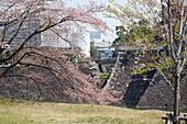 Kitahanebashi with blossom in spring seen from Imperial Palace ground, Chiyoda-ku, Tokyo, Japan
