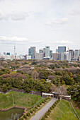 Higashi-Koen in spring with skyscrapers of Marunouchi and Tokyo Skytree in the background, Chiyoda-ku, Tokyo, Japan