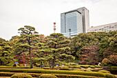 Ni-No-Maru Garden in autumn on a rainy day, Chiyoda-ku, Tokyo, Japan