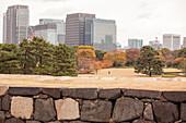View from Tenshu-dai over Honmaru Garden, Chiyoda-ku, Tokyo, Japan