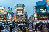 Famous pedestrian zebra crossing in Shibuya during rain, Tokyo, Japan