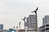 Acrobatic demonstration of traditional fire fighters during Dezome-shiki in Odaiba, Tokyo, Japan