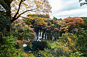 Shiraito waterfalls from viewpoint above in autumn, Fujinomiya, Shizuoka Prefecture, Japan