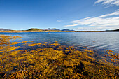 Lake, Fjord, Bay, Algae, Summer, Vestvagoya, Lofoten, Norway, Europe