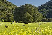 Pasture near Orient, Majorca, Balearic Islands, Spain
