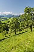 Upper Austrian Alpine foothills near Maria Neustift, Birnbäume, Upper Austria, Austria