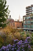 The High Line Park, Empire State Building, Manhatten, New York City, New York, USA