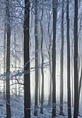 Raureif im Wienerwald, Badener Lindkogel, Niederösterreich, Österreich