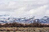 Mountain Range near  Bishop , Eastern Sierra Nevada, Lone Pine, California, USA, North America