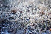 Mit Frost bedeckte Wiese, Allgäu, Bayern, Deutschland