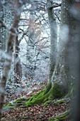Mit Frost bedeckter Wald, Allgäu, Bayern, Deutschland