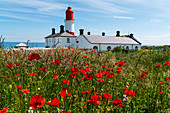 'Souter Lighthouse with a field of red poppies in the foreground; South Shields, Tyne and Wear, England'