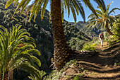walking track, date palms, landscape, tramper, side valley near Vallehermoso, La Gomera, Canary Islands, Spain