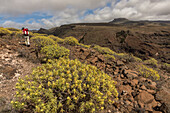 Euphorbia bushes, walking track Las Pilas, La Gomera, Canary Islands, Spain