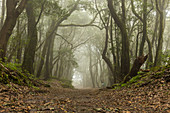 walking track, laurel forest, nobody, La Gomera, Canary Islands, Spain