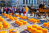 Cheese market on Markt Square in front of Stadhuis Gouda city hall, Gouda, South Holland, Netherlands, Europe