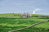 Irish landscape with cottages and horses near Doolin, Munster, Co, Clare, Ireland, Europe