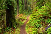 Harts Cove Trail, Neskowin Crest Research Natural Area, Siuslaw National Forest, Oregon.