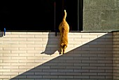 Cat playing with the shadows,location banyoles,girona,catalonia,spain,.