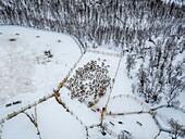 Reindeer herding, Laponian Area, Stora Sjofallet National Park, Lapland, Sweden. World heritiage Area.