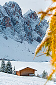 Trentino Alto Adige, Italy, Autumn scenic outdoor, foliage and green hills with snowy trees, Funes Valley, Dolomites Alps