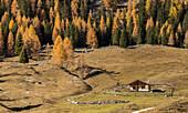Cianpo de Crosc, Dolomiti d'Ampezzo Natural Park, Cortina d'Ampezzo, Belluno, Veneto, Italy, Cianpo de Crosc