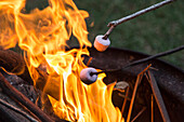 Close-up of marshmallows being toasted over bonfire