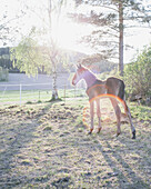 Foal standing in field during sunny day