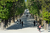 France. Paris 5th district. The Jardin des plantes. Jogger in a path of plane trees