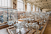 France. Paris 5th district. The Jardin des plantes (Garden of Plants). The Gallery of Anatomy