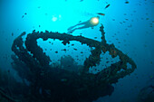 Philippines, South China Sea, Coron Bay, underwater viewing, diver near the shipwreck Irako. Not to be used by diving tour operators.