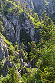 Hiking Trail through wilderness area Kaltenbachwildnis at Mount Traunstein, Upper Austria, Austria, Europe