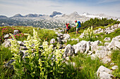 A man and a woman hiking through mountain landscape in spring at Mount Krippenstein, Dachstein area, Upper Austria, Austria, Europe