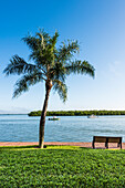 Park bench and palm tree at Ostego Bay with a view at the waterway, Fort Myers Beach, Florida, USA