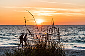 A couple goes for the sunset on a stroll on the beach at the Gulf of Mexico, Boca Grande, Florida, USA