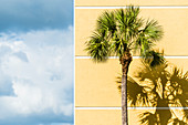 A palm tree in front of a yellow wall of a building as a contrast to the blue sky, Fort Myers Beach, Florida, USA