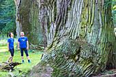 Jogger machen eine Pause bei den Tausendjährigen Eichen von Ivenack, Ivenacker Eichen, Mecklenburgische Seenplatte, Mecklenburgische Seen, Ivenack, Mecklenburg-Vorpommern, Deutschland, Europa
