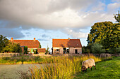 Holiday in the countryside, farm, farm house Bauernkate, pond, sheep, Biosphere Reserve Schaalsee, Mecklenburg lake district, Klein Thurow, Mecklenburg-West Pomerania, Germany, Europe