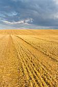 Harvested field, crops, landscape, Alt Meteln, Mecklenburg-West Pomerania, Germany, Europe