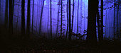 blue hour, Forest, Black Forest, Germany