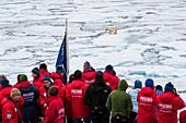Touristen beobachten Eisbär auf Eisschollen, Packeis an der Eiskante auf 81°14,3N und 021°08,6 E Spitzbergen, Svalbard