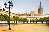 Patio de las Banderas with orange trees, view to Giralda, bell tower of the cathedral, UNESCO World Heritage, Sevilla, Seville, Andalucia, Spain, Europe