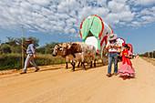 caravan of ox carts, El Rocio, pilgrimage, Pentecost festivity, Huelva province, Sevilla province, Andalucia, Spain, Europe